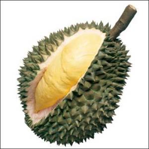 "The Durian Tagline: ""smells like toilet, tastes like dream"""